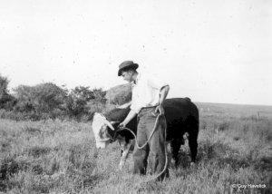 Henry with a Hereford bull